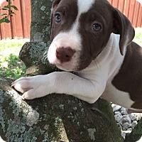 Adopt A Pet :: Willie - Windermere, FL