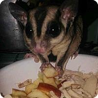 Adopt A Pet :: The 3 Amigo's - Pahrump, NV