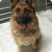Adopt A Pet :: Adelle - Cornwall, ON