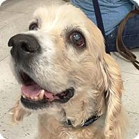 Adopt A Pet :: Bode - Newington, VA