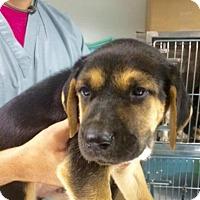Adopt A Pet :: Gatlin - Barnegat, NJ