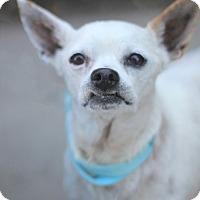 Adopt A Pet :: Eugene - Goleta, CA