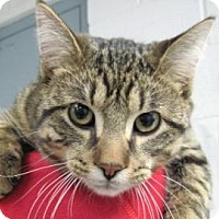 Adopt A Pet :: Skit - Adrian, MI