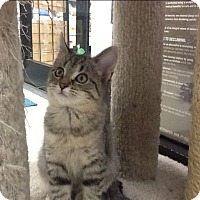 Adopt A Pet :: Mufasa - Warren, OH