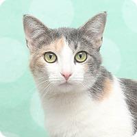 Adopt A Pet :: Yemena - Chippewa Falls, WI