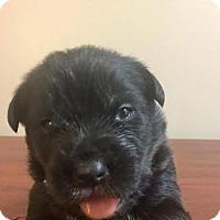 Adopt A Pet :: HEINEKEN - Pomfret, CT