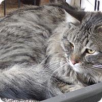Adopt A Pet :: Dexter - Quail Valley, CA