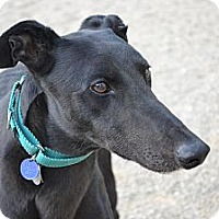 Adopt A Pet :: Soggin (Got A Plan) - Chagrin Falls, OH