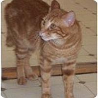 Adopt A Pet :: Bill - El Cajon, CA