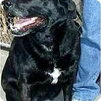 Adopt A Pet :: Beary - Scottsdale, AZ