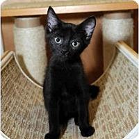 Adopt A Pet :: KoKo - Farmingdale, NY