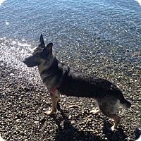 Adopt A Pet :: Lucy - Gig Harbor, WA