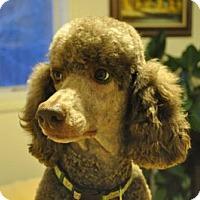 Adopt A Pet :: FIONA - Elk River, MN