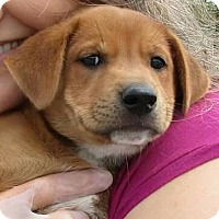 Adopt A Pet :: Leilah - Charlestown, RI