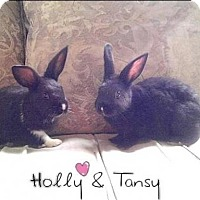 Adopt A Pet :: Holly & Tansy - Los Angeles, CA