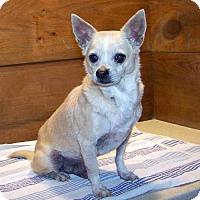 Adopt A Pet :: 16-d01-014 Steve, Jr. - Fayetteville, TN