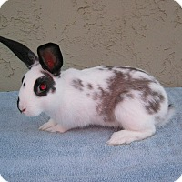 Adopt A Pet :: Amy - Bonita, CA