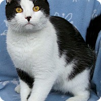 Adopt A Pet :: Minette - St Louis, MO