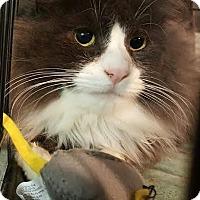 Adopt A Pet :: Quinn - brewerton, NY