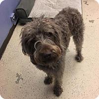 Adopt A Pet :: Ty - San Francisco, CA