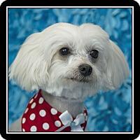Adopt A Pet :: Daisy Mae - San Diego, CA