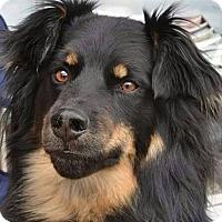 Adopt A Pet :: CAIN - Winnipeg, MB