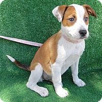 Adopt A Pet :: Brena - San Diego, CA