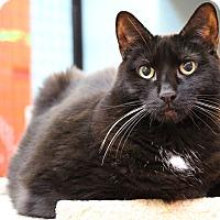 Adopt A Pet :: Bijou - Sarasota, FL