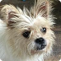 Adopt A Pet :: Cami-Adoption Pending - Boulder, CO