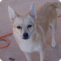 Adopt A Pet :: Roxanne - Apple Valley, UT