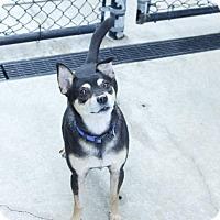 Adopt A Pet :: Oron - Salem, OR