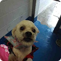 Adopt A Pet :: FROST - Pearland, TX