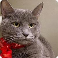 Adopt A Pet :: April - Millersville, MD