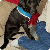 Adopt A Pet :: Jethro - Milwaukee, WI