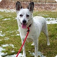 Adopt A Pet :: Phoebe - Lafayette, NJ