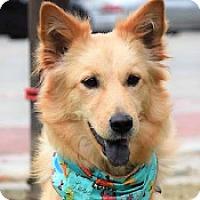 Adopt A Pet :: Della - San Francisco, CA