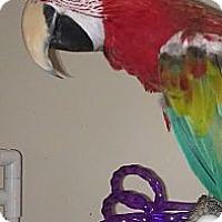 Adopt A Pet :: MISSY - Mantua, OH