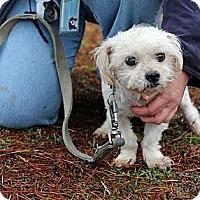 Adopt A Pet :: Albus - Tinton Falls, NJ