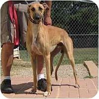 Adopt A Pet :: Ozzie - Oak Ridge, NC