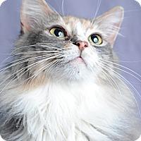 Adopt A Pet :: Pun'kin - Atlanta, GA