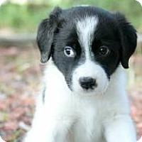 Adopt A Pet :: Triumph - Austin, TX