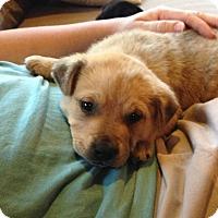 Adopt A Pet :: Twix - Homewood, AL