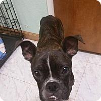 Adopt A Pet :: Ritter - Weatherford, TX