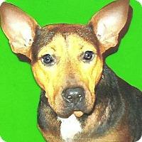 Adopt A Pet :: nellie - Sebring, FL