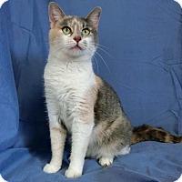 Adopt A Pet :: LEANN - New Cumberland, WV