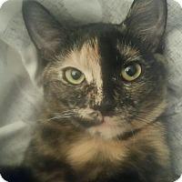 Adopt A Pet :: Buttercup - Portland, ME
