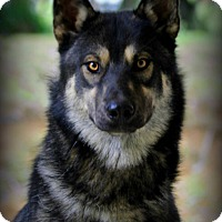 Adopt A Pet :: Cain - Dixon, KY