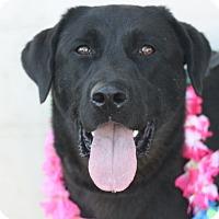 Adopt A Pet :: Josephine - Canoga Park, CA