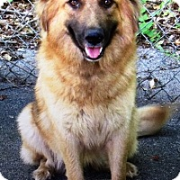 Adopt A Pet :: I'M ADOPTED Teagen Nice - Oswego, IL