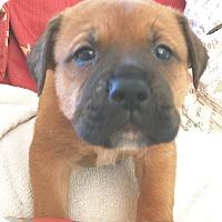 Adopt A Pet :: David - St Petersburg, FL